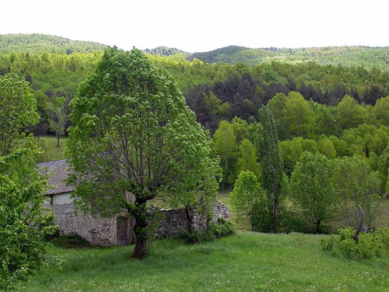 Bosque de Anciles