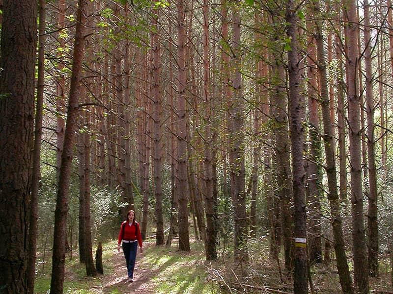 Bosque El Run
