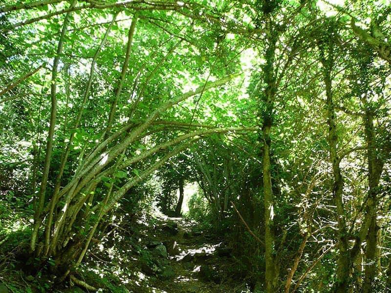Ruta botánica Benasque