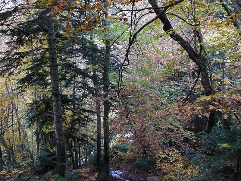 Vuelta por el bosque Gorgas